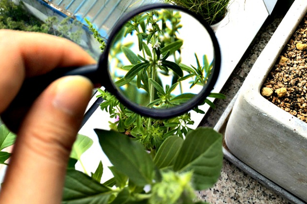 Botany Careers In India How To Become A Botanist