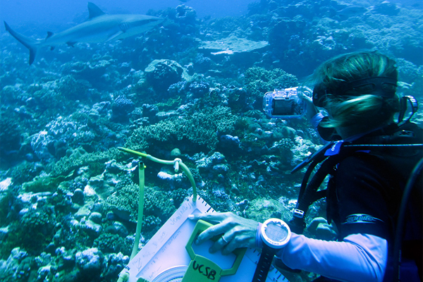 Marine Biology As A Career  How To Become A Marine Biologist