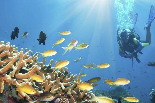 oceanography careers in india   how to become a
