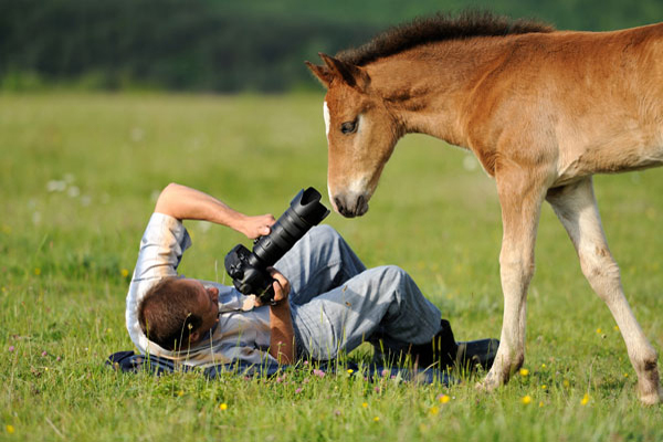Wildlife Nature Photography As A Career Option How To