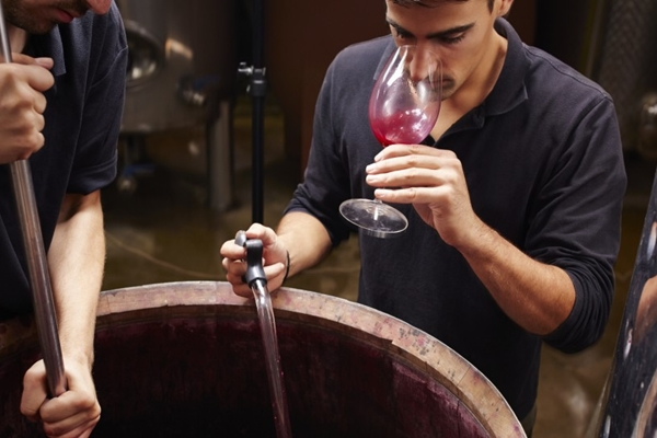 Oenology (Wine Making)